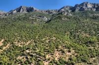 Hory poblíž Kelcyrë