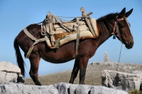 Mountain Transport