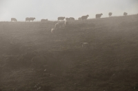 Grazing in the clouds