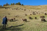 Pastevec s ovcemi