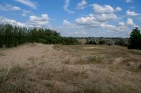 Habitat Lacerta viridis, Dabas
