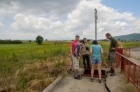Bufotes viridis in a trap, soouthern Serbia