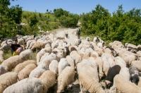 Shepherds, southern Albania