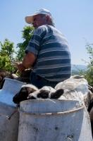 Shepherd, southern Albania