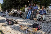 Market, Berat