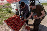 Sales of strawberries, Kosovo