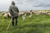 Shepherd, Kosovo