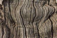 Chestnut bark, Veliki Ostros