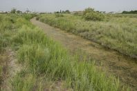 Habitat of Pelophylax bedriagae, Noramarg