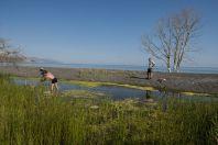 Herping, Lake Sevan