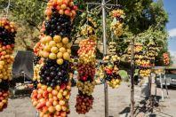 Cherries, Zangakatun