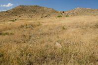 Habitat of Telescopus fallax, Shaghap
