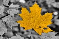 Autumn, NP Sutjeska