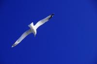 A bird, Dubrovník