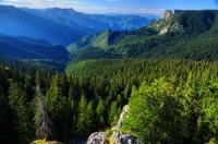 Prales Peručica v NP Sutjeska