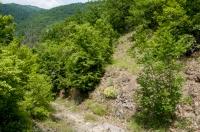 Habitat Platyceps najadum a Podarcis erhardii, Prohor