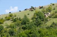 Pastva, Crkvino