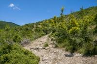Vicinity of Dojran lake