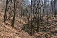 Bukové lesy v Malých Karpatech