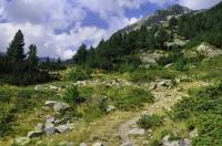 Locality of Vipera berus, Pirin