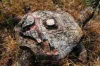 Tortoise, Arkutino
