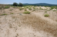 Primorsko, sand dunes