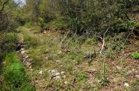 Habitat of Coronella austriaca