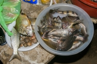 Fish, Tarcoles