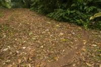 Ant trail, RNG-Manzanillo