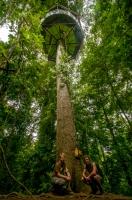 Tree House, RNG-Manzanillo