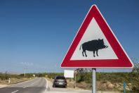 Beware of pigs, Lišane Ostrovičke