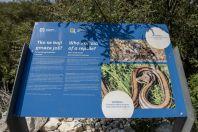 Reptiles, Lake Vrana