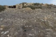 Habitat of Macrovipera lebetina, Lara