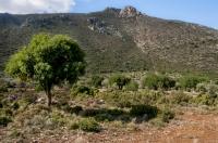 Near Tyros
