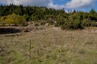 Habitat near Kosmas