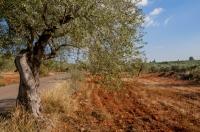 Landscape near Geraki