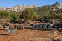 Livestock, Xyli Dimotikon