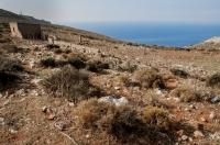 Habitat of Ophiomorus punctatissimus, Mani