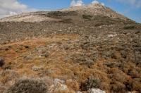 Habitat of Vipera ammodytes, Mani