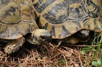 A opět želvy