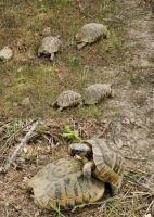Želví jaro