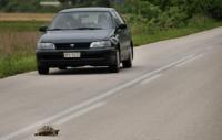 Želvy jsou všude