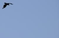 Vulture, Kapsalo