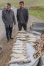 Prodejci ryb, Splik