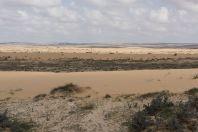 Northern Negev sand dunes