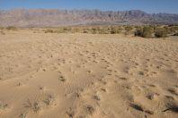 Samar Sand Dunes