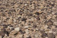 Desert, Arava
