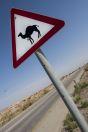 Camel xing, Arava