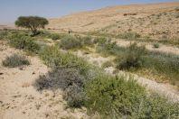 Wadi Maale