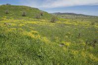 Spring in the Golan